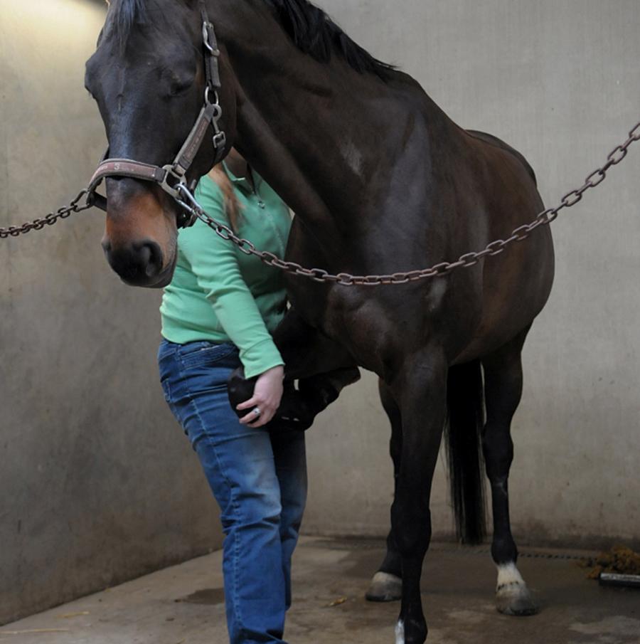 Behandelingen-paard-mobilisatie